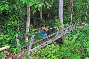 Dschungel-Bruecke