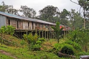 Dschungel-Langhaus